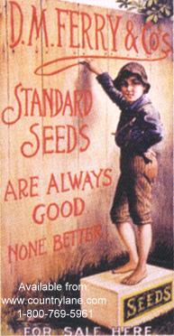 Click for D.M. FERRY STANDARD SEEDS Detail