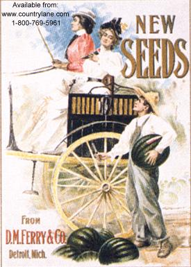 Click for FERRY SEEDS / 2 WOMEN MAN Detail